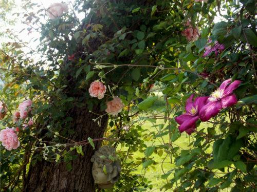 Gite-Le-Couturon-Allier-rosiers